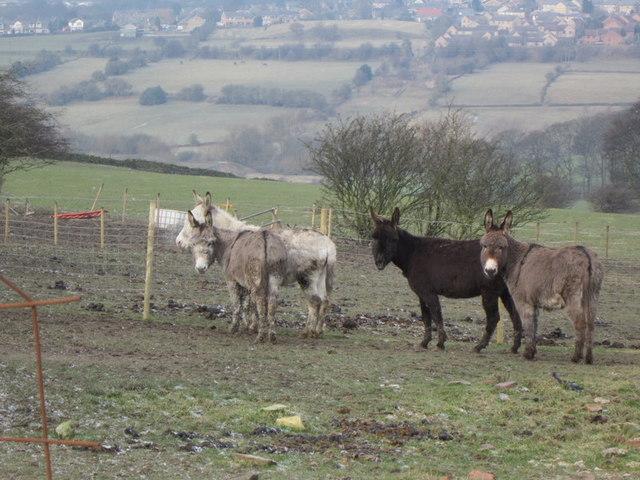 Donkeys at Beck View Farm