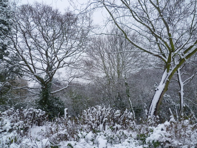 View across Rockcliffe Gardens in the snow