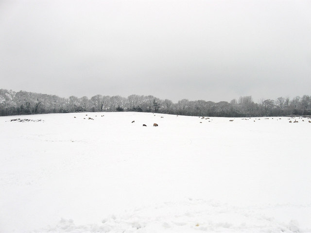 The Brook/Hilly Field/Toll Field (1)