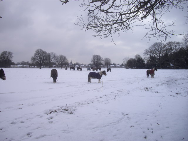 Horses in the snow in Osterley Park