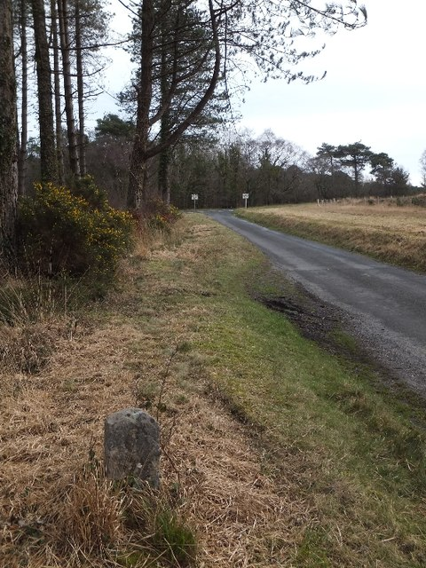 Boundary stone in Haldon Forest