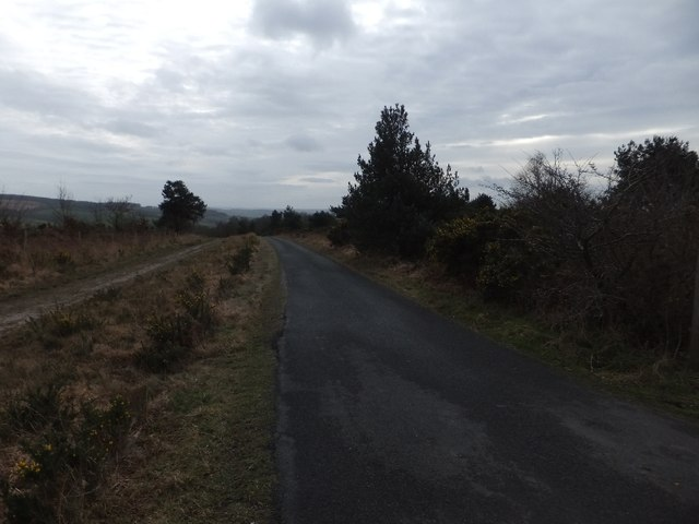 Minor road and forest track on Ideford Common