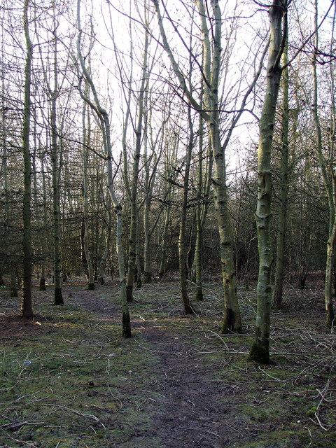 Valley Park, Cramlington