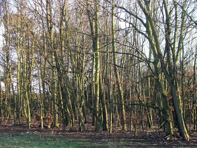 Woodland in Valley Park