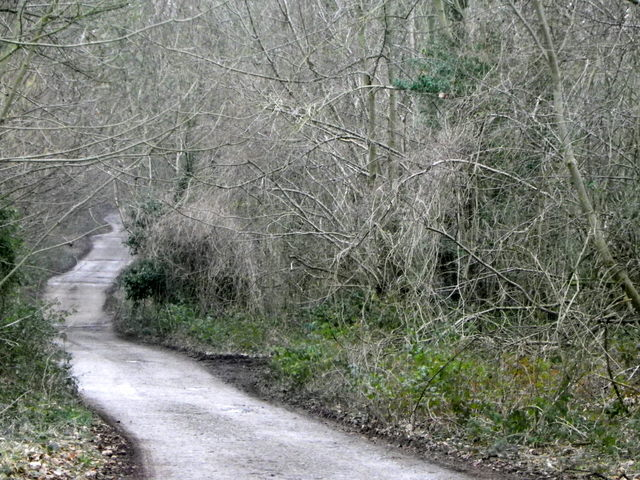 The Old Shaftesbury Drove, Wilton