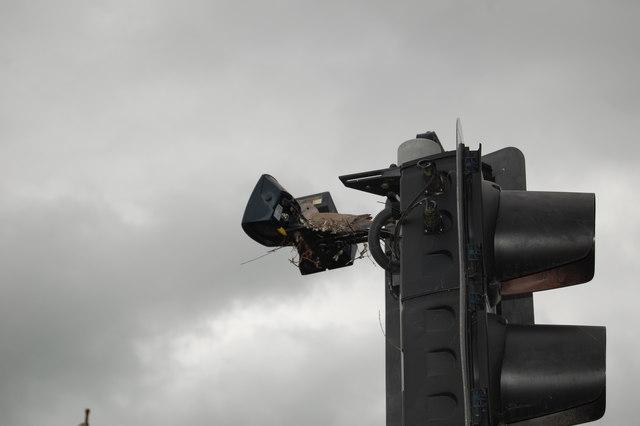 Collared Dove nesting in traffic light