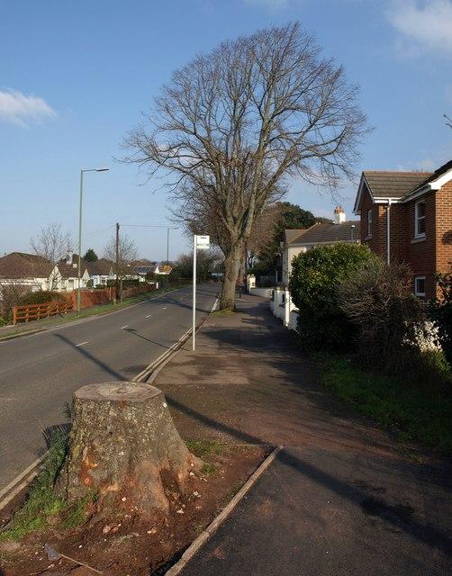Tree stump, Barton Road, Torquay