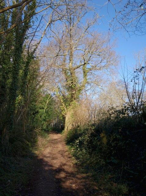 Bridleway, Welsury Covert