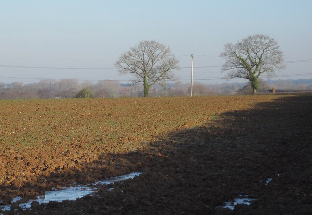 Trees across a field, Stoneyford