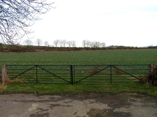 Field by Wire Lane