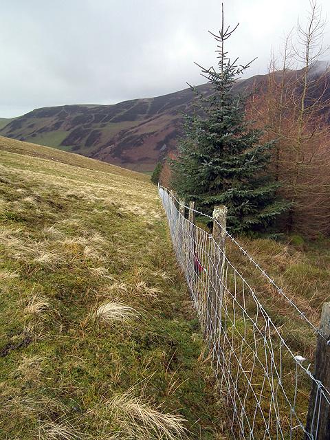 Fence line running down to Llawr-y-cwm-bach