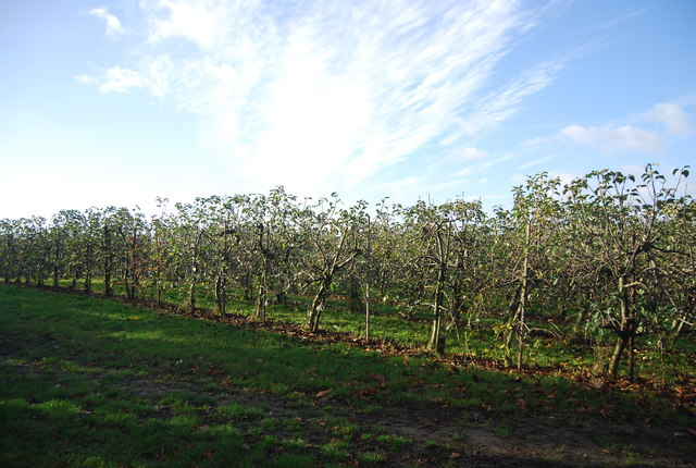 Orchard by the footpath