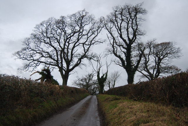 Trees, Litton Rd