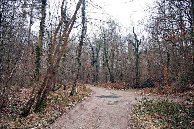 Styants Wood