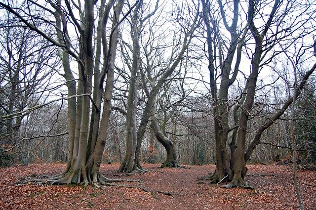 Oldbury Wood