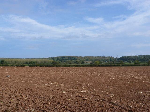 Field near Haselor