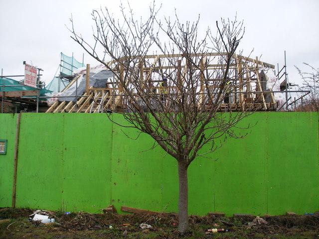 Development, Willow Crescent East, Willowbank