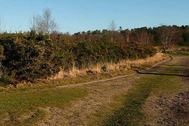 Track on Ludshott Common