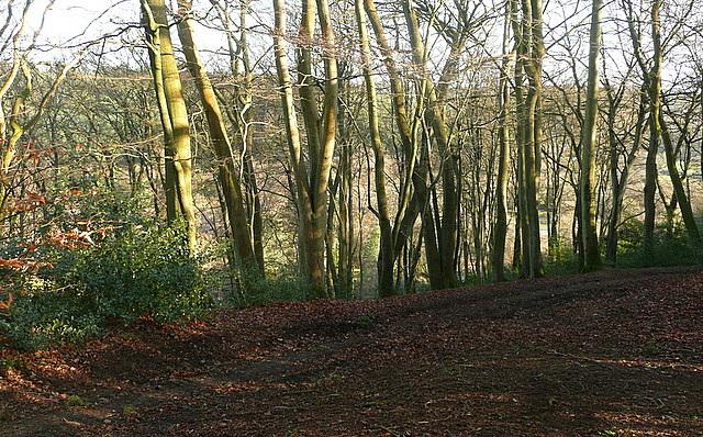 Path to Whitmoor Vale