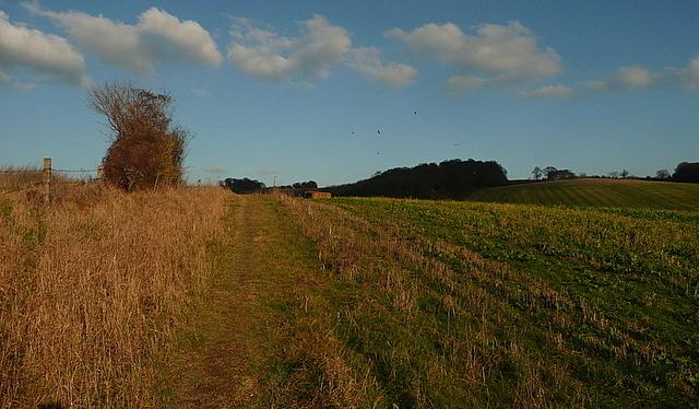Footpath towards Cookshall Farm