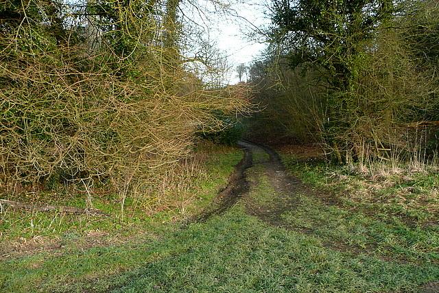 Little Cookshall Wood