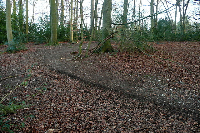 Clearing in Great Cookshall Wood