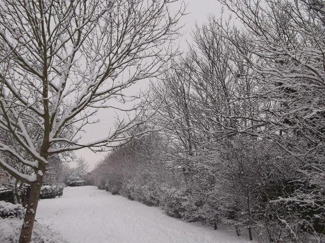 Garden area near Ferndale Road
