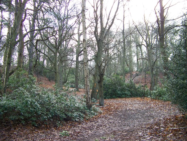 Jocelyn's Wood - near Sandringham
