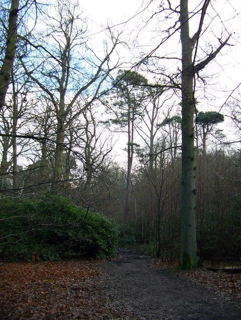 Woodland walk in the Sandringham Estate forest