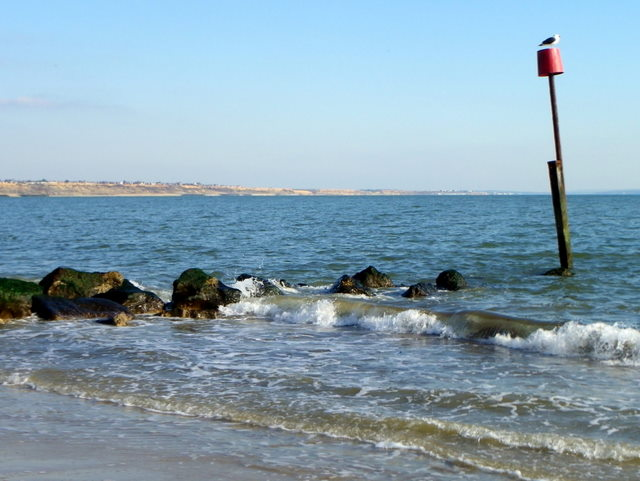 Groyne and gull, Mudeford
