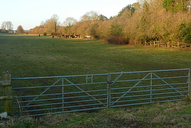 Field next to Bradenham Road