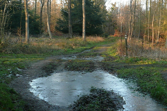 Path junction in Hearnton Wood