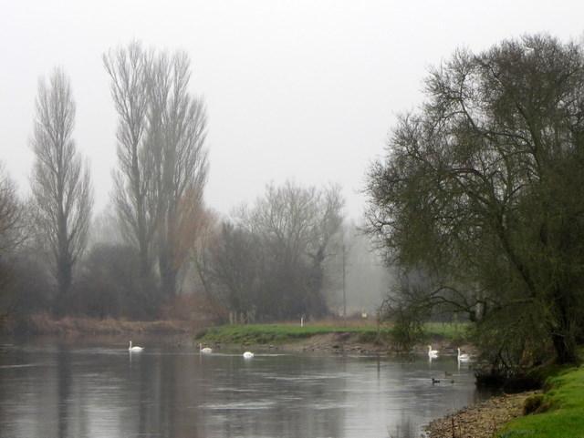 Swans on the Avon, Bodenham