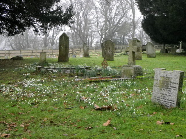 Snowdrops in the churchyard, Whitsbury