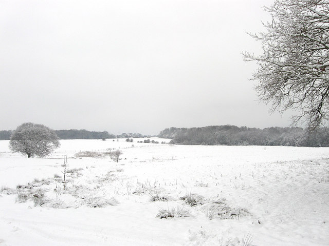 Pond Field