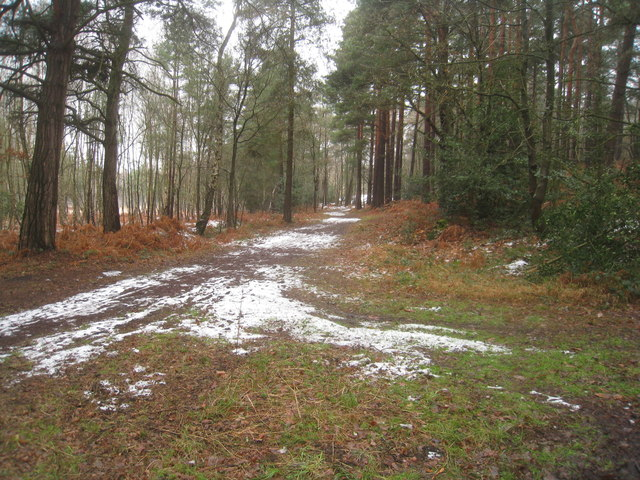 Path at Pyestock Hill