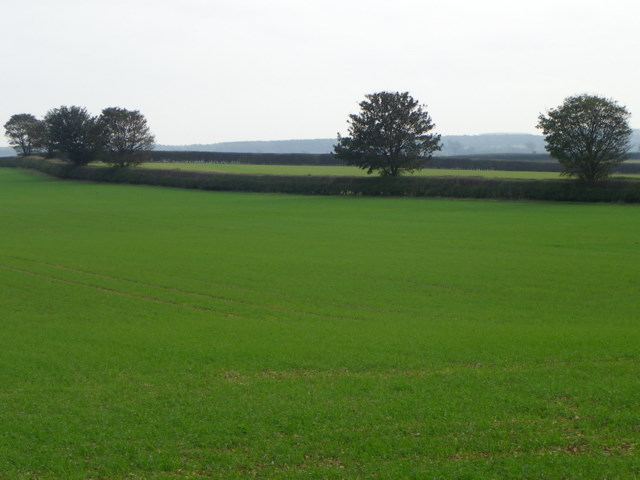 Green fields near Stainby