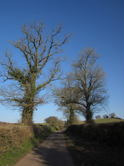Oaks near Colepark