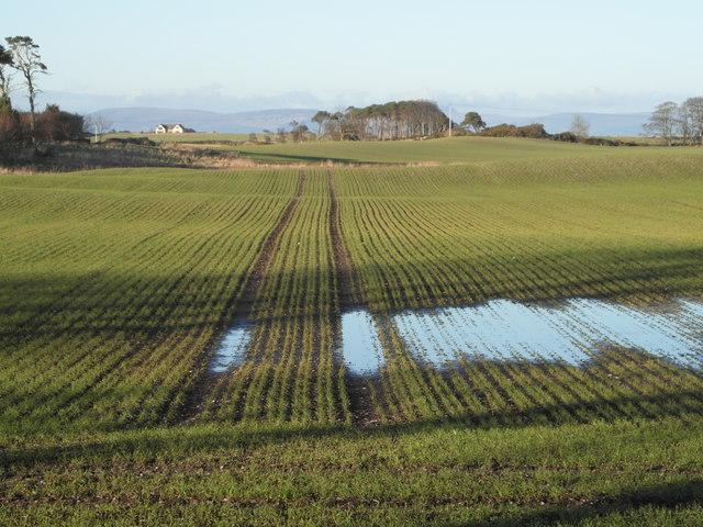 Winter crop near Geanies
