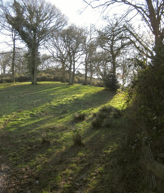 Open woodland below Blackborough Wood