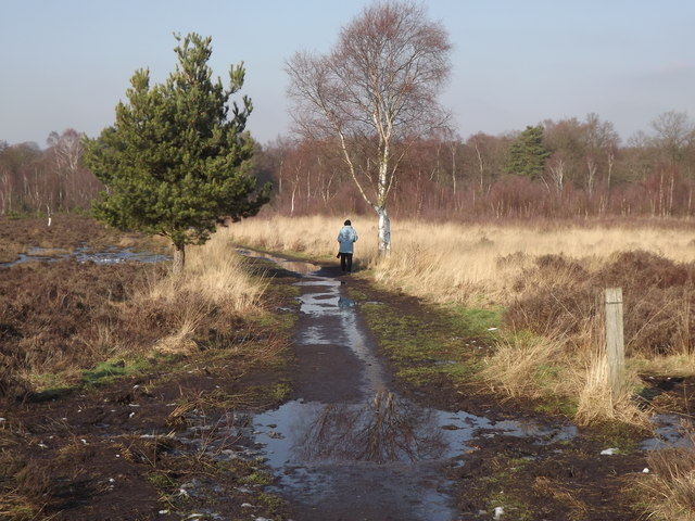 Whitmoor Common, SSSI