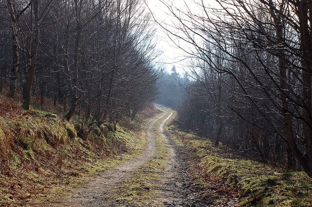 Forest track, Merrybrae