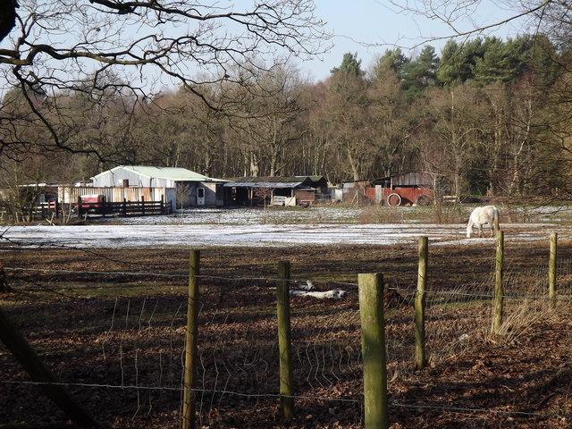 Fields on Whitmoor Common