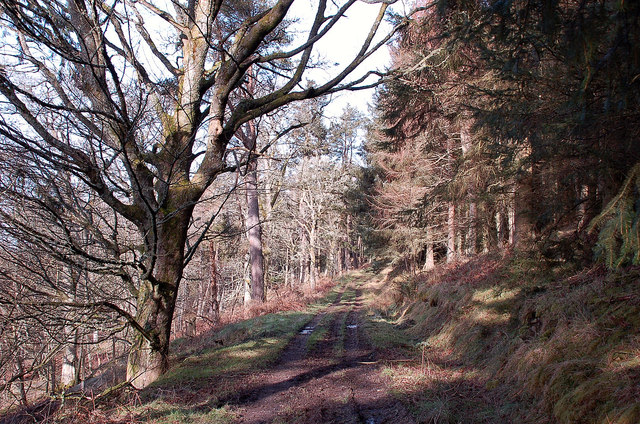 High Wood, Glenormiston