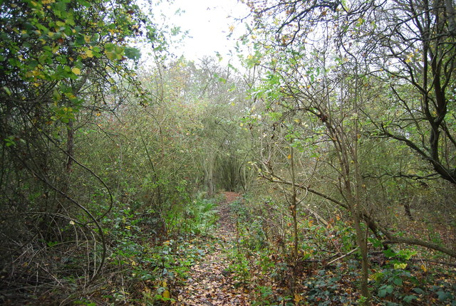 Path in High Halstow NNR