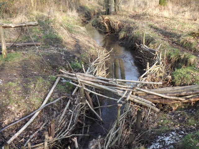 Stream on Whitmoor Common