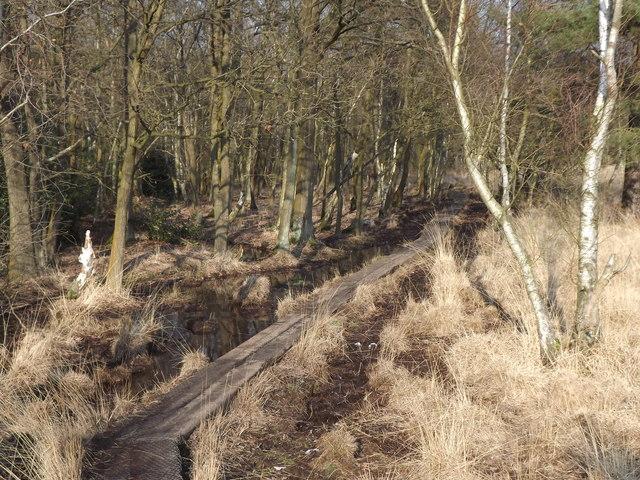 Boardwalk, Whitmoor Common