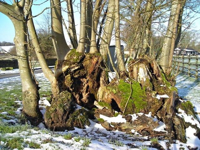 Arboreal resurrection