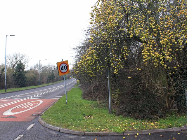 Crab-apples by the Evesham Road
