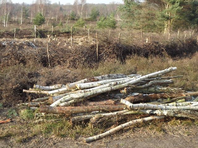 Log Pile, Whitmoor Common